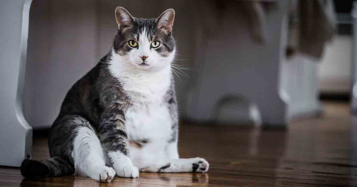 4 Common Reasons For Scooting In Cats