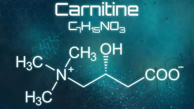 carnitine improves fat metabolism