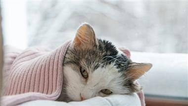 upper respiratory tract infection in cats
