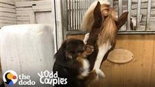 Dog and Horse 'Wouldn't Be Happy Without Each Other'