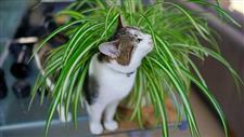 plants and flowers that are safe for cats