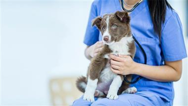 alternatives to spaying and neutering