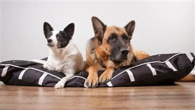 link between dog size and behavior