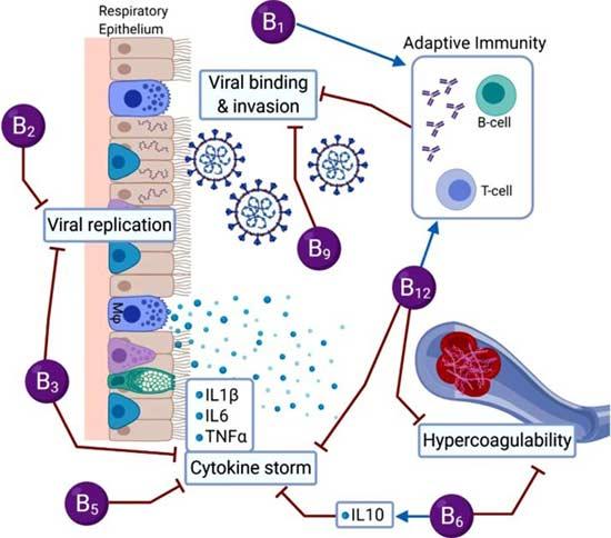 B vitamins for COVID-19