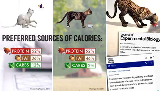 source de calories préférée du chat