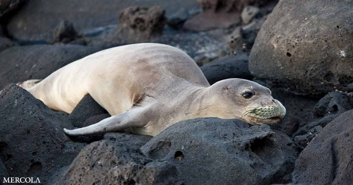25% of Sea Lions Have This Carcinoma From Pollution