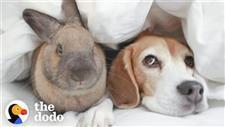 Typically, Beagles and Bunnies Wouldn't Be Friends
