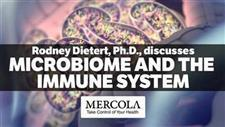 How Your Microbiome Influences Your Immune System