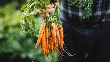 can carrots help combat covid