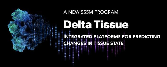 delta tissue