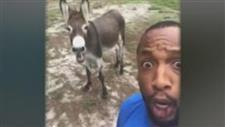 Donkey Singing Backup Goes Viral!