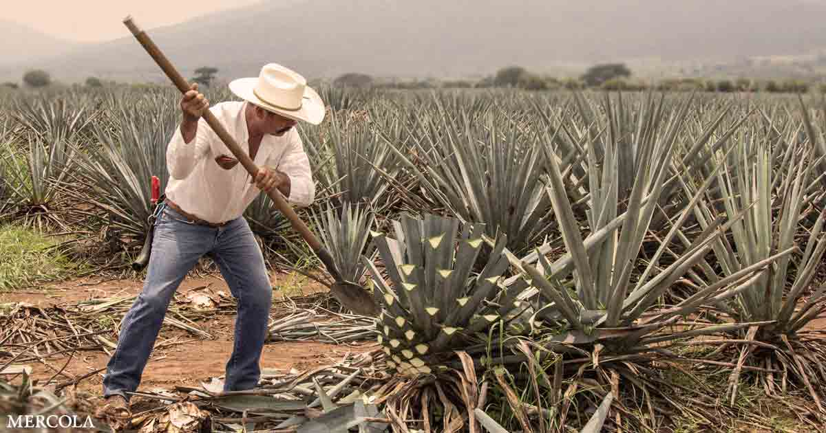 The Billion Agave Project