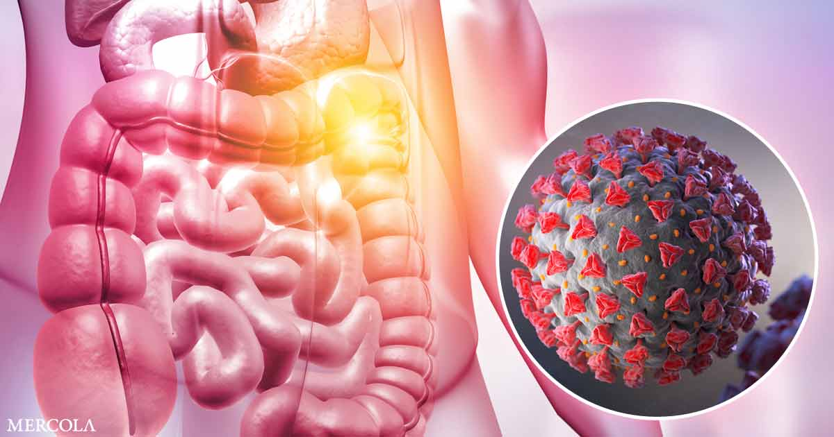 Probiotics to Help Combat COVID