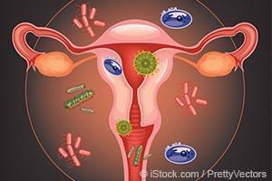 bacteria in reproductive system
