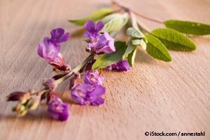 sweet marjoram plant