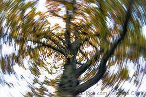 tree-spin