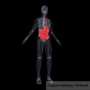 Digestive System Gut Flora