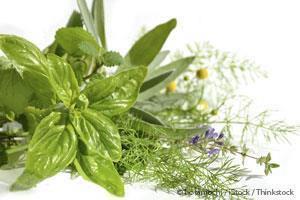 7 Plantas Medicinales Que Pueden Utilizar Para Beneficiar Su Salud
