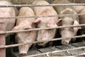 Carne de Puerco Contaminada