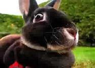 A Rabbit's Incredible Underground 'Digs'…