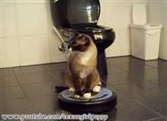 Tidy Cat Gets a Ride on a Roomba