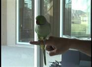 Bird Does the Most Amazing Tricks Ever!