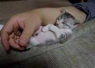 Tiny Kitty Falls Asleep