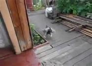 Dog Fetches Cat