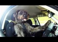 Driving School for Dogs