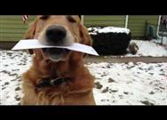 Dog Fetches Mail