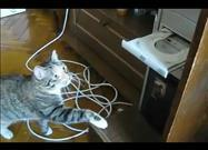 Cat vs. DVD Drive