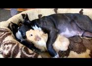 Interspecies Cuddle Session