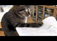 Cat Has a Thing for Paper Products