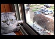 Cat Tries to Pet Pigeon