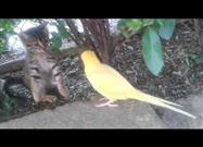 Parrot Tries to Befriend Cautious Kitten