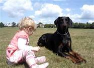 Doberman Keeps Watchful Eye on Toddler