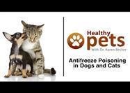 Poison Alert: Keep Antifreeze Containers Tightly Closed and Far Away from Your Pets