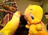 Bowie the Parrot Talks to Tweety