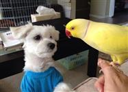 Pup and Parrot Pals