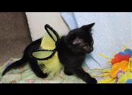 Tiny Black Kitten in Her Bee Costume