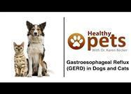 Does Your Pet Lick and Cough Incessantly? It Could Mean Gastroesophageal Reflux Disease (GERD)