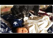 Dog Tucking in an Infant – So Sweet!