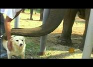 Elephant and Dog: Forever Friends