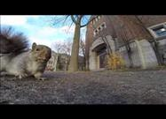 Uh-oh! Squirrel Nabs GoPro