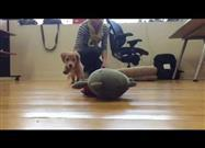 Slo-Mo Puppy Attack!