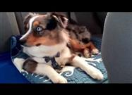 "Puppy Wakes to His Favorite Song from ""Frozen"""