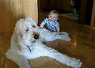 Sweet Interaction: Dog and Baby