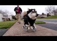 Derby the Dog Learns to Run on 3D Printed Prosthetics