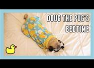 Doug the Pug Is… So Dear!