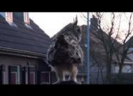 Eagle Owl Lands on Woman's Head